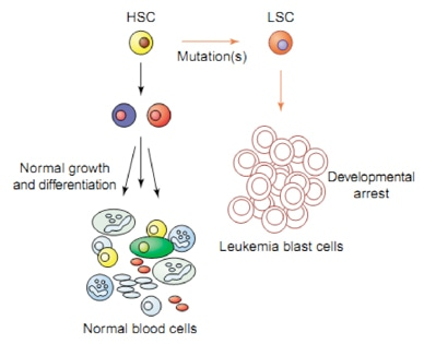 Approaches to induced leukemia