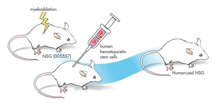 Immunodeficiency Mice